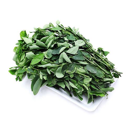 Katuk/ Sweet leaf vegetable