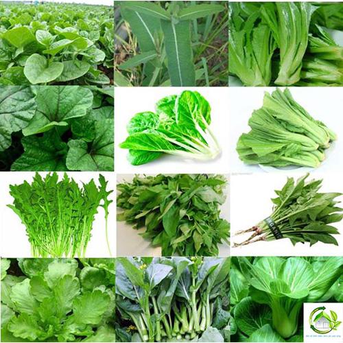 Dai Ngan Organic Vegetable