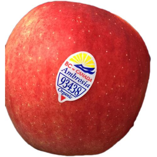 Canadian Ambrosia Organic Apple