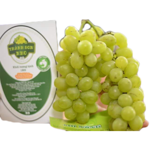 Ninh Thuan Green Grapes
