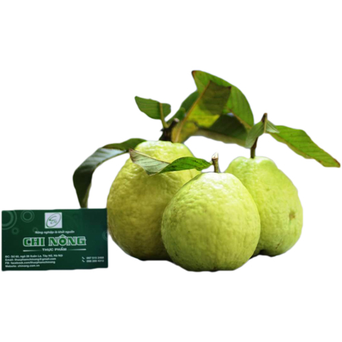 Phuc Loi Guava